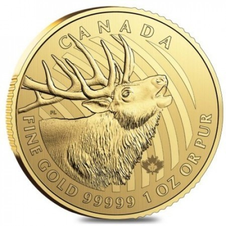 1 Troy ounce gouden munt Call of the Wild - Moose 2017