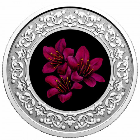 Silver coin Flower emblem of Canada purple Saxifrage